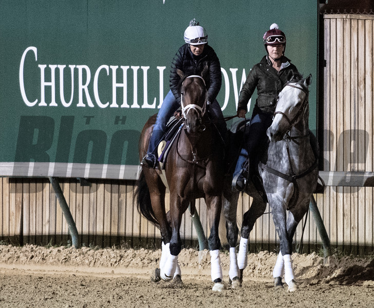 City of Light on track at Churchill Downs on Breeders' Cup week Monday October 29, 2018 in Louisville, KY.  Photo by Skip Dickstein