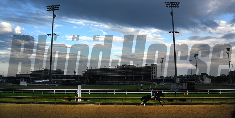 Seven Trumpets works Sunday Oct. 28, 2018 before the Breeders' Cup at Churchill Downs in Louisville, KY Photo by Skip Dickstein