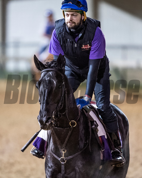Quarteto De Cordas with exercise rider Brody Wilkes gallops Sunday Oct. 28, 2018 before the Breeders' Cup at Churchill Downs in Louisville, KY Photo by Skip Dickstein