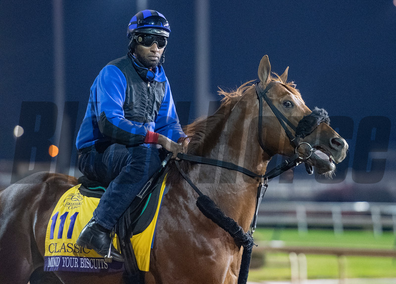 Mind Your Biscuits takes to the track for morning exercise before the Breeders' Cup at Churchill Downs Wednesday Oct. 31, 2018 in Louisville, KY.  Photo by Skip Dickstein