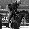 Next Shares Breeders' Cup Churchill Downs Chad B. Harmon Black & White