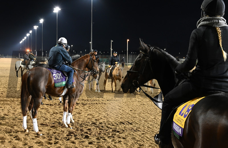A group of Mott trained Breeders Cup entrants including Channel Make, left and Yoshida out for morning exercise Tuesday Oct. 30, 2018 at Churchill Downs in preparation for the 2018 Breeders' Cup in Louisville, KY.  Photo by Skip Dickstein