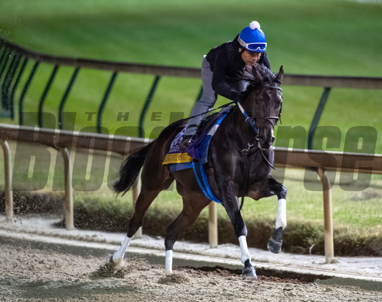 Midnight Bisou on track at Churchill Downs on Breeders' Cup week Monday October 29, 2018 in Louisville, KY.  Photo by Skip Dickstein