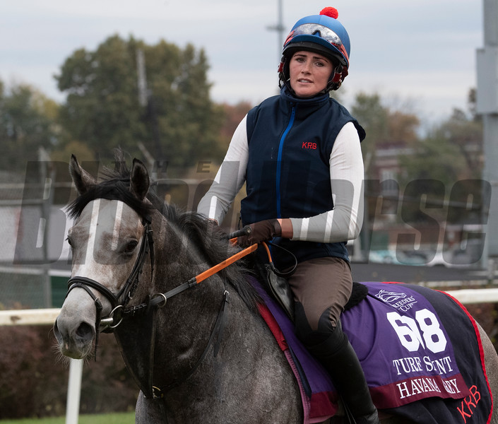 Havana Grey out for morning exercise Tuesday Oct. 30, 2018 at Churchill Downs in preparation for the 2018 Breeders' Cup in Louisville, KY.  Photo by Skip Dickstein