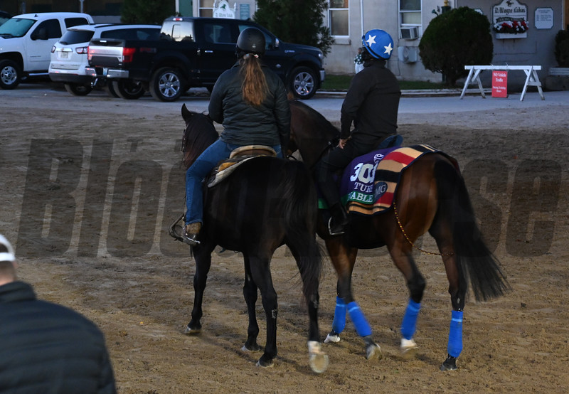 Enable leaves the track at Churchill Downs on Breeders' Cup week Monday October 29, 2018 in Louisville, KY.  Photo by Skip Dickstein
