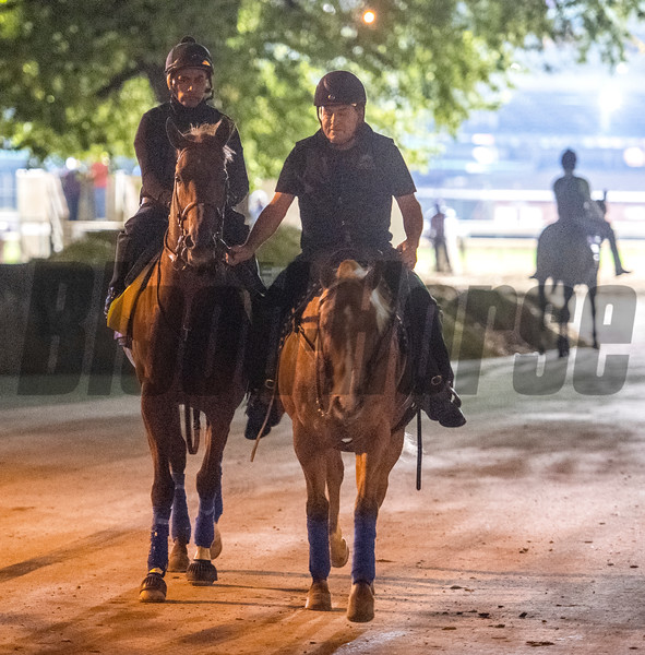 Collected returns to barn after time on track for his morning exercise before the Breeders' Cup at Churchill Downs for morning exercise Wednesday Oct. 31, 2018 in Louisville, KY.  Photo by Skip Dickstein