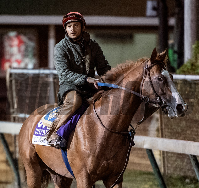 Catalina Cruise on track at Churchill Downs on Breeders' Cup week Monday October 29, 2018 in Louisville, KY.  Photo by Skip Dickstein