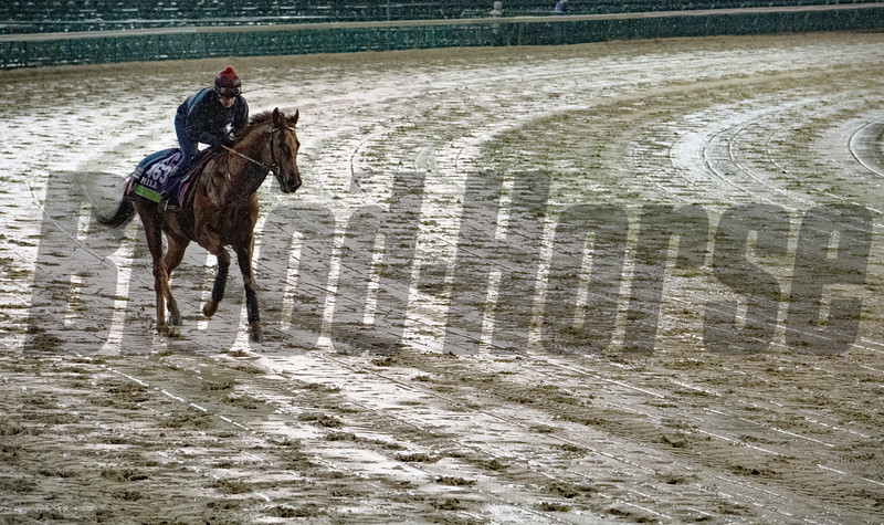 Lightning Spear gallops through rain and mud this morning Thursday Nov. 1, 2018 at Churchill Downs the home of the 2018 Breeders' Cup in Louisville, KY.  Photo by Skip Dickstein