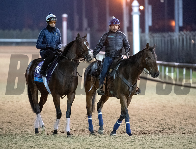 Complexity out for morning exercise Tuesday Oct. 30, 2018 at Churchill Downs in preparation for the 2018 Breeders' Cup in Louisville, KY.  Photo by Skip Dickstein