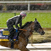 Filly Abel Tasman gallops through the mud and rain this morning Thursday Nov. 1, 2018 at Churchill Downs the home of the 2018 Breeders' Cup in Louisville, KY.  Photo by Skip Dickstein