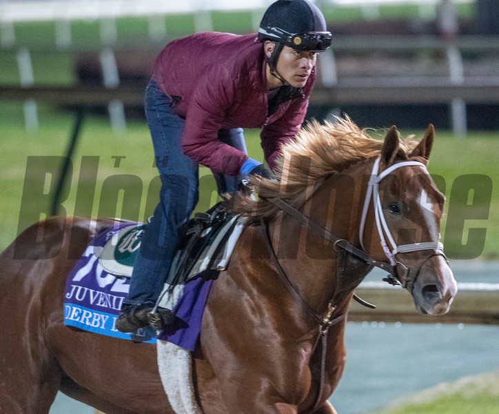 Derby Date out for morning exercise Tuesday Oct. 30, 2018 at Churchill Downs in preparation for the 2018 Breeders' Cup in Louisville, KY.  Photo by Skip Dickstein