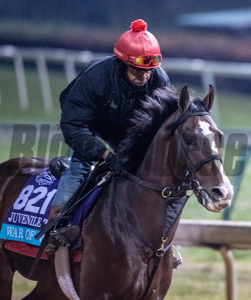 War of Will gallops Sunday Oct. 28, 2018 before the Breeders' Cup at Churchill Downs in Louisville, KY Photo by Skip Dickstein