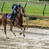 Monomoy Girl gallops through rain and mud this morning Thursday Nov. 1, 2018 at Churchill Downs the home of the 2018 Breeders' Cup in Louisville, KY.  Photo by Skip Dickstein