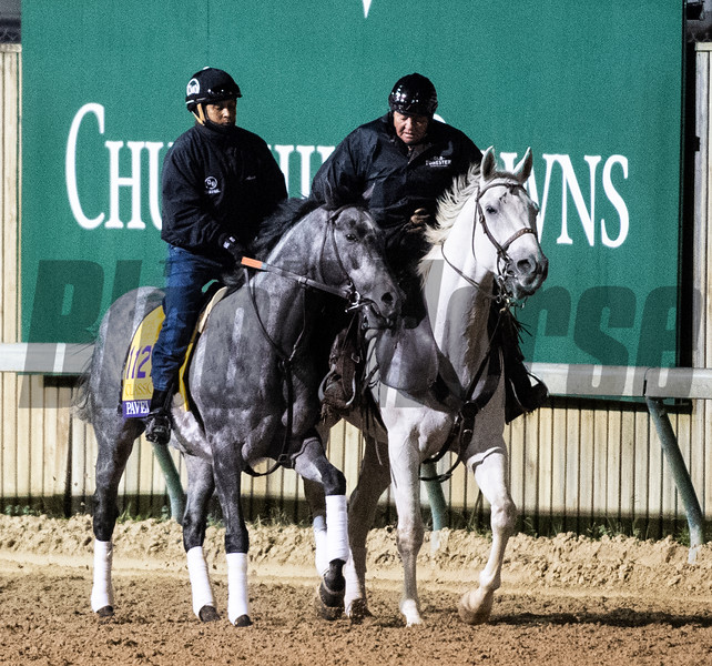 Pavel on track at Churchill Downs on Breeders' Cup week Monday October 29, 2018 in Louisville, KY.  Photo by Skip Dickstein