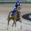 Monomoy Girl Breeders' Cup Churchill Downs Chad B. Harmon