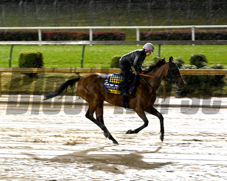 Filly Abel Tasman gallops through the mud this morning Thursday Nov. 1, 2018 at Churchill Downs the home of the 2018 Breeders' Cup in Louisville, KY.  Photo by Skip Dickstein