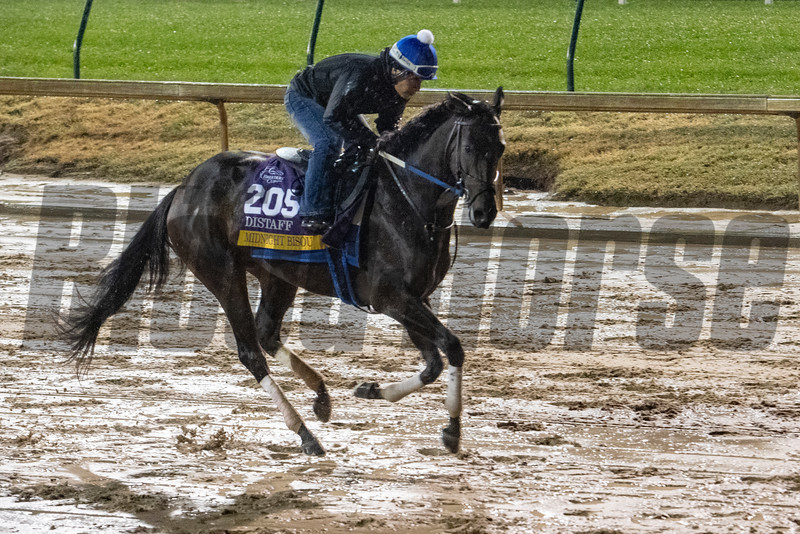 Midnight Bisou gallops through rain and mud this morning Thursday Nov. 1, 2018 at Churchill Downs the home of the 2018 Breeders' Cup in Louisville, KY.  Photo by Skip Dickstein