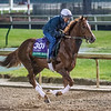 Channel Maker out for morning exercise Tuesday Oct. 30, 2018 at Churchill Downs in preparation for the 2018 Breeders' Cup in Louisville, KY.  Photo by Skip Dickstein