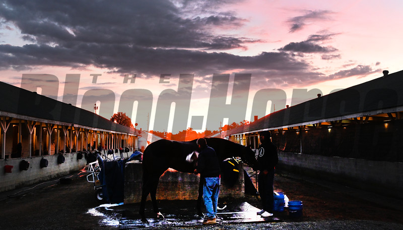 Much Better gets a bath after morning exercise Tuesday Oct. 30, 2018 at Churchill Downs in preparation for the 2018 Breeders' Cup in Louisville, KY.  Photo by Skip Dickstein