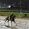 Bellafina gallops through the mud this morning Thursday Nov. 1, 2018 at Churchill Downs the home of the 2018 Breeders' Cup in Louisville, KY.  Photo by Skip Dickstein