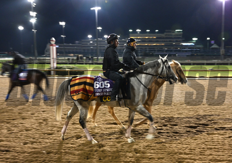 Disco Partner out for morning exercise Tuesday Oct. 30, 2018 at Churchill Downs in preparation for the 2018 Breeders' Cup in Louisville, KY.  Photo by Skip Dickstein