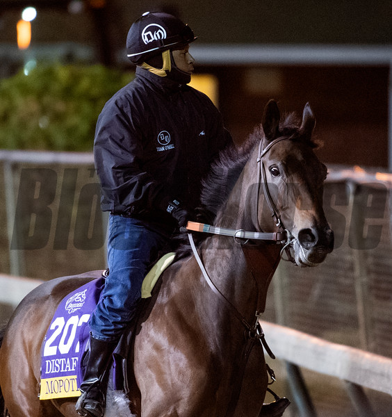 Mopotism on track at Churchill Downs on Breeders' Cup week Monday October 29, 2018 in Louisville, KY.  Photo by Skip Dickstein