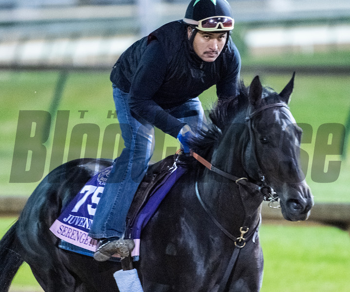 Serengeti Empress on track at Churchill Downs on Breeders' Cup week Monday October 29, 2018 in Louisville, KY.  Photo by Skip Dickstein