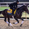 Yoshida gallops Sunday Oct. 28, 2018 before the Breeders' Cup at Churchill Downs in Louisville, KY Photo by Skip Dickstein