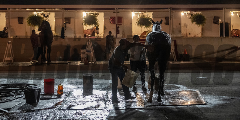 A thoroughbred gets constant care while in the care of trainers at Churchill Downs Wednesday Oct. 31, 2018 in Louisville, KY.  Photo by Skip Dickstein