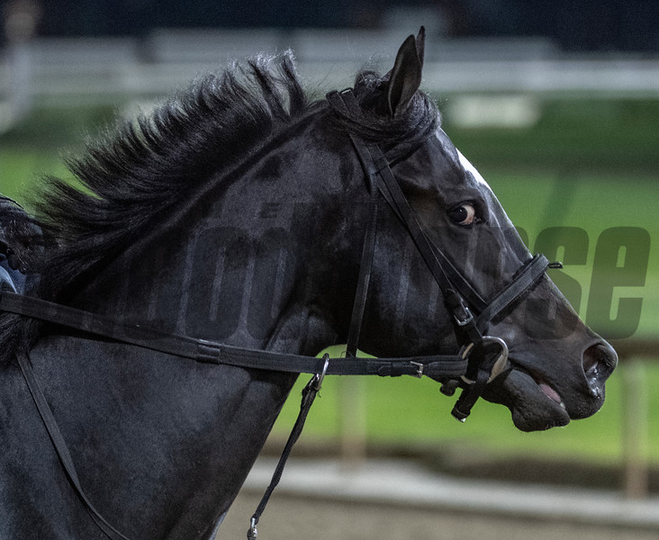 Srike Silver on track at Churchill Downs on Breeders' Cup week Monday October 29, 2018 in Louisville, KY.  Photo by Skip Dickstein