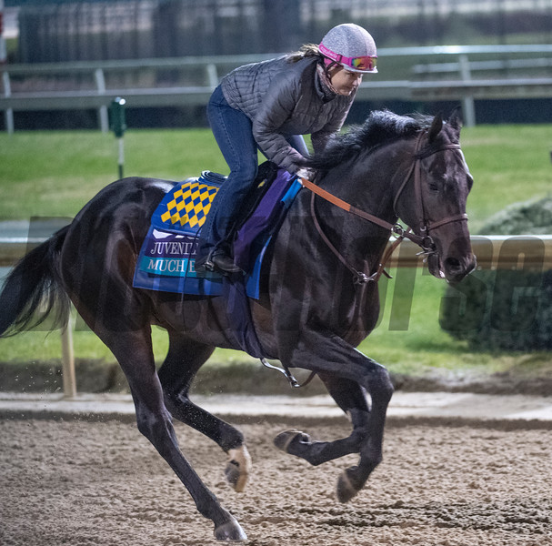 Much Better out for morning exercise Tuesday Oct. 30, 2018 at Churchill Downs in preparation for the 2018 Breeders' Cup in Louisville, KY.  Photo by Skip Dickstein
