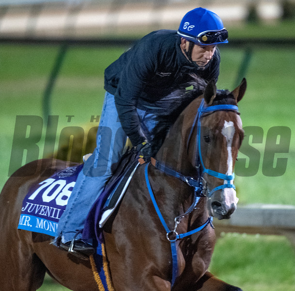 Mr. Money out for morning exercise Tuesday Oct. 30, 2018 at Churchill Downs in preparation for the 2018 Breeders' Cup in Louisville, KY.  Photo by Skip Dickstein