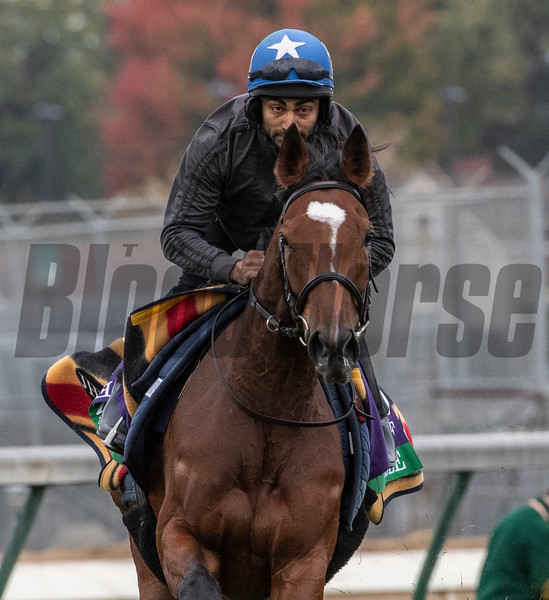 Enable out for morning exercise Tuesday Oct. 30, 2018 at Churchill Downs in preparation for the 2018 Breeders' Cup in Louisville, KY.  Photo by Skip Dickstein