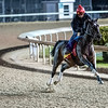 Wonder Gadot jumps her shadow on track at Churchill Downs on Breeders' Cup week Monday October 29, 2018 in Louisville, KY.  Photo by Skip Dickstein