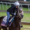 Vibrance on track at Churchill Downs on Breeders' Cup week Monday October 29, 2018 in Louisville, KY Photo by: Skip Dickstein