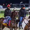 Wonder Gadot on track at Churchill Downs on Breeders' Cup week Monday October 29, 2018 in Louisville, KY.  Photo by Skip Dickstein