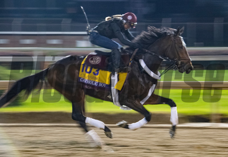 Catholic Boy on track for his morning exercise before the Breeders' Cup at Churchill Downs for morning exercise Wednesday Oct. 31, 2018 in Louisville, KY.  Photo by Skip Dickstein