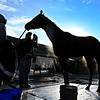 Promises Fulfilled is bathed after his work Sunday Oct. 28, 2018 before the Breeders' Cup at Churchill Downs in Louisville, KY Photo by Skip Dickstein