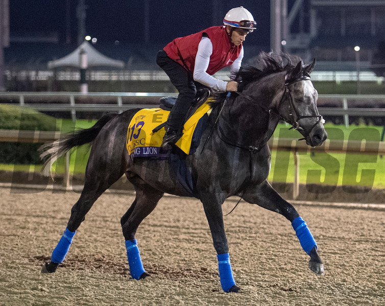 Roaring Lion takes to the track for morning exercise before the Breeders' Cup at Churchill Downs Wednesday Oct. 31, 2018 in Louisville, KY.  Photo by Skip Dickstein