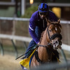 Mind Your Biscuits on track at Churchill Downs on Breeders' Cup week Monday October 29, 2018 in Louisville, KY.  Photo by Skip Dickstein