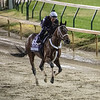 Firenze Fire gallops through the mud this morning Thursday Nov. 1, 2018 at Churchill Downs the home of the 2018 Breeders' Cup in Louisville, KY.  Photo by Skip Dickstein