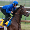 Thunder Snow gallops Sunday Oct. 28, 2018 before the Breeders' Cup at Churchill Downs in Louisville, KY Photo by Skip Dickstein