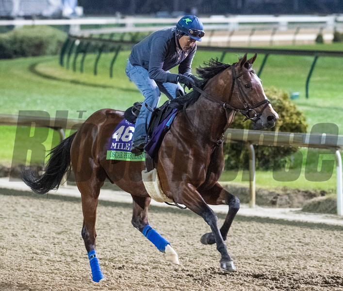 Oscar Performance out for morning exercise Tuesday Oct. 30, 2018 at Churchill Downs in preparation for the 2018 Breeders' Cup in Louisville, KY.  Photo by Skip Dickstein
