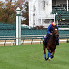 Enable on the turf course at Churchill Downs on October 31, 2018. Photo By: Chad B. Harmon