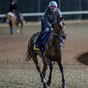Val Dori on track at Churchill Downs on Breeders' Cup week Monday October 29, 2018 in Louisville, KY.  Photo by Skip Dickstein