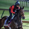 Shamrock Rose gallops Sunday Oct. 28, 2018 before the Breeders' Cup at Churchill Downs in Louisville, KY Photo by Skip Dickstein
