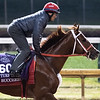 Bucchero gallops Sunday Oct. 28, 2018 before the Breeders' Cup at Churchill Downs in Louisville, KY Photo by Skip Dickstein
