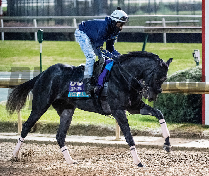 Forty Under out for morning exercise Tuesday Oct. 30, 2018 at Churchill Downs in preparation for the 2018 Breeders' Cup in Louisville, KY.  Photo by Skip Dickstein