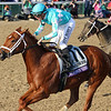 Monomoy Girl Breeders' Cup Distaff Churchill Downs Chad B. Harmon