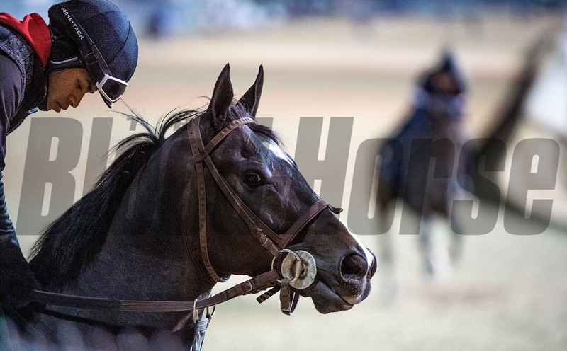 2018 Breeders' Cup<br /> Skip Dickstein Photo
